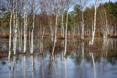 Международен ден на влажните зони