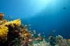 Международен ден на океаните