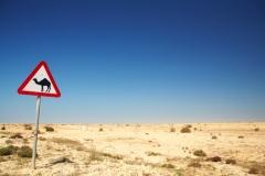 Международен ден за борба с опустиняването и сушата